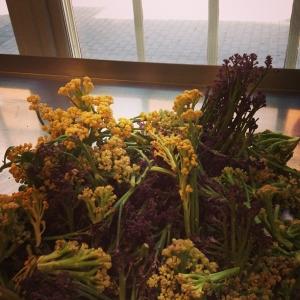 Syltade blomkålsskott till hösten