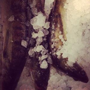 Dagens råvara i vår Walk through, nyfångad, fantastiskt fin gös från Ängsö 140 kr/kilo hel.