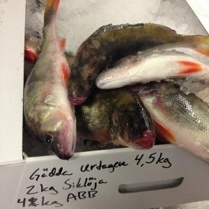 Dagens råvara, Abborre 130kr/kg! #ängsöfisk
