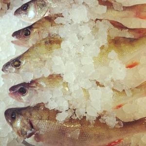 Dagensråvara: Ny fiskad Abborre från Pär Vidlund på Ängsö 13kr per hg i vår walk through #luxdagfordag #walkthrough