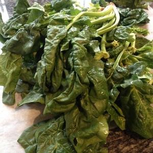 Dagens råvara i walk-through härlig spenat! 7 kr/hg. Tryckfelsnisse har varit framme. Sen har vi sej med broccoli, ägg och brynt smör för 85 kr! Välkomna!