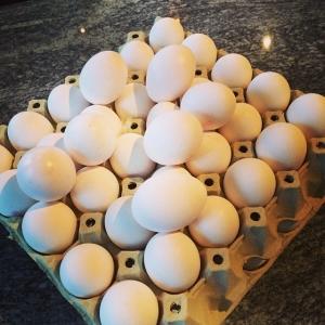 Ekologiska Ägg från Sanda hönseri, 4kr/st Kolja med kryddris, blomkål och citron 85kr i #Walkthrough