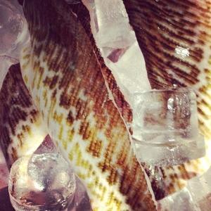 Dagens råvara, Fjärsing direkt från fiskeaktionen i Göteborg, 28 kr/ hg för filé. Dagens husman rödvinsbräserad dovhjortsbog med linguini och parmesan 85:- take away, 115:- i matsalen. Välkomna