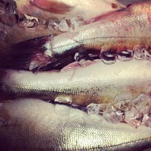 Dagens råvara, nyfångad Mälargös fiskad av Vidlund, 18:-/hg hel. Dagens husman fänkålsgravad lax  med dillstuvad färskpotatis, broccoli och citron, 85:- take away, välkomna