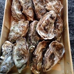 Dagens råvara att köpa med, Franska Fine de claires (3) ostron, 16:-/st, dagens husman halstrad råbiff, tomatsallad, rostad potatis. 85:- take away, 115:- i matsalen