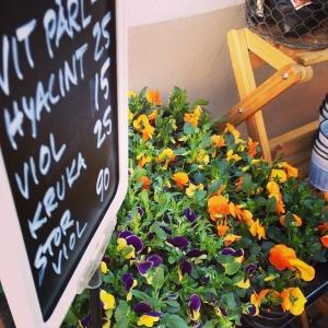 Bra väder= Walk Through! I dag har vi bl.a. Vackra blommor #luxdagfordag #lux #walkthrough #wt