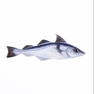 Dagens husman är denna härliga fisk: Ångad kolja med räkor, ägg, pepparrot & brynt smör, 115:-, i WT endast 85:- Välkomna! #Luxdagfordag #walkthrough #husman #kolja