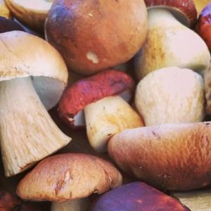Kom förbi Lux idag och köp dagens råvara som är: Färsk Karl-Johan svamp från Värmland 50:-/100g Dagens husman är Frasig kolja med kaprismajonnäs och broccoli. 115:- eller 85:- i WT:en. Välkomna! #karljohansvamp #varmland #dagens #husman #luxdagfordag #walkthrough
