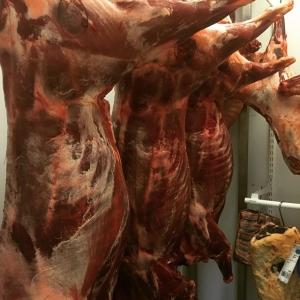 Nytillskott till hängkylen igår, Sörmländska vildsvin. #östermalma #pontus #luxdagfördag