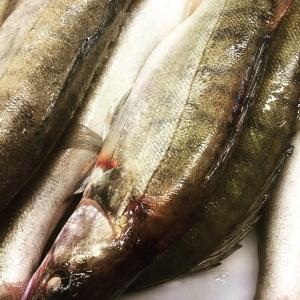 Ikväll serverar vi pinfärsk gös från Per Vidlund i Ängsö #nyfiskad #fisk #rigor #luxdagfördag
