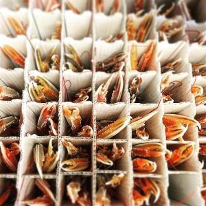 Trongbodda, men ack så färska! #luxdagfördag #lux #havskräftor #cheflife