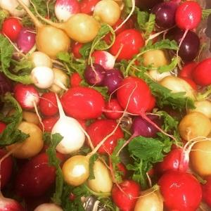 Det ÄR gött med rädisor!! Ikväll serveras dom till Landöröding👍 #luxdagfördag