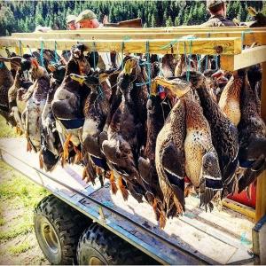 Dagens bästa såt, 154 fåglar på 13 skyttar. Ganska nöjd med mitt eget skytte i dag, 11 änder på 26 skott. Välkomna att avnjuta mina gräsänder på @luxdagfordag om 11 dagar! #gräsand #jakt #andjakt #jaktiaproteam #lokalaråvaror #luxdfd #lux #luxdagfördag