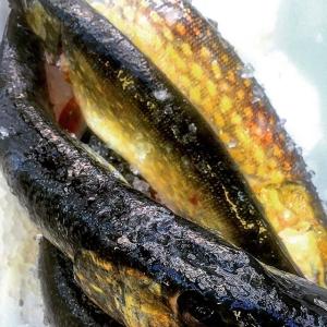 Nyfiskad gädda från Ängsö är en av smakerna på Farmers Dinner, fiskad av Per Vidlund #farmersdinner #farmtotable #luxdagfördag