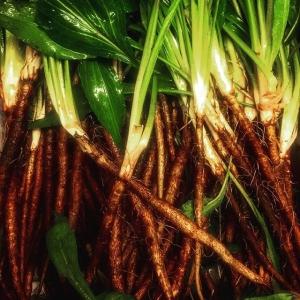 Härlig svartrot!! Snart på menyn! #farmtotable #luxdagfördag #unikråvara