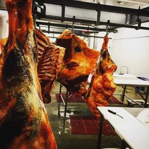 Idag har vi delat ner vår 342,7 kg fjällko i mer hanterbara bitar med anatomisk guidning hos @fallmanskott #luxdagfördag #unikråvara #hängmörat