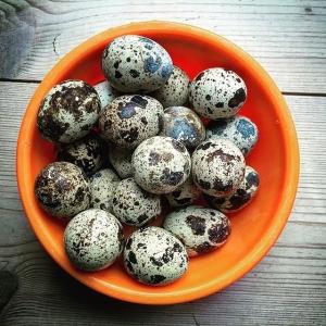 Dessa vackra ägg!  Farmers Dinner 19 maj, insperationskontot är laddad. #farmersdinner  #unikrestaurangupplevelse #luxdagfördag #lux #vaktel #vaktelägg #storatollbygård #stenhusegård #farmtotable #cheflife