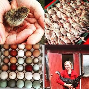 Härligt besök inför #farmersdinner 19/5 hos Victor och Karolina @rosaskattladan #vaktel #ägg #honung #biodling #farmtotable #luxdagfördag #pärlhöna #hållbart