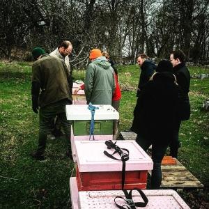Inspektion av #rosaskattlådan biodling inför #farmtotable 19 maj #hållbart #luxdagfördag