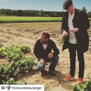 """#Repost @frickluxrestauranger with @repostapp ・・・ Gotland levererade verkligen, Antes """"hemliga"""" ekologiska odling på Stora Tollby Gård var en av höjdarna. På torsdag mellan 16-18 finns Antes grönsaker till försäljning på @luxdagfordag dax för #farmersmarket (Jordgubbarna är galet goda) #försttillkvarn #luxdagfördag #farmersdinner #farmtotable"""
