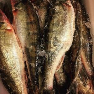 Många av kvällens gäster kom för att äta Ängsö-gös ikväll efter veckans recept i #dn  #oslagbargösfrånängsöfisk #farmtotable #löjrom #junköfiskarna #luxdagfördag