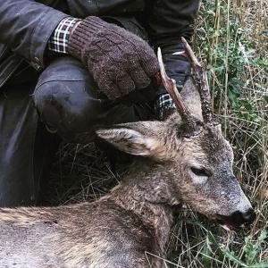 Fantastisk dag i skogarna runt Kungsbyn/Kvistberga Jaktlyckan var med mig Råbock & Dovhjortskalv föll för min bössa. Om ca 45 dygnsgrader finns dem att avnjuta på @luxdagfordag Stort tack @henriklud för en riktigt bra jaktdag! #cheflife #luxdagfördag #jakt #drevjakt #vardagslux #råbock #rådjur