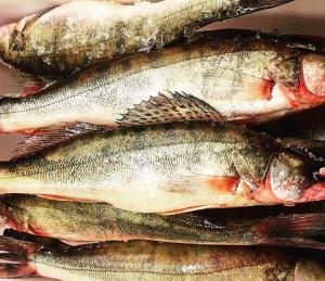 Sista veckan för året med gös från @angsofisk  Tack Per för den här säsongen! #härligråvara #vardagslux #luxdagfördag #ängsöfisk