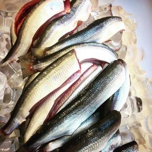 Eldad siklöja och löjrom fiskad av @pervidlund med grillat smörviniagrette, på menyn hela dagen!  #ängsöfisk #luxdagfördag #färskfisk #löjrom