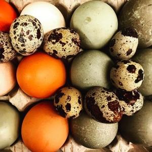 Provlagning idag inför #farmersdinner den 26/4 med @rosaskattladan @storatollbygard & @stenhuse  #luxdagfördag #ägg #ramslök #rabarber #potatis #skocka #sparris