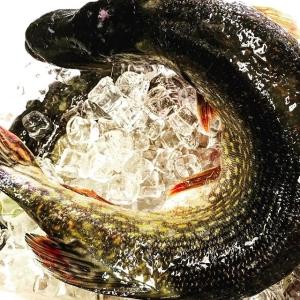Lördag, sol och stenhård gädda👊 Nu kör vi!! #ängsöfisk #luxdagfördag #frånsjötillbord